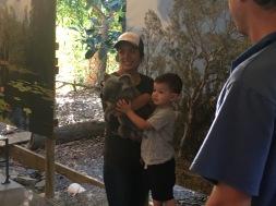Oh the cute Koala! I love them!