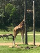 Steve Irwin's Zoo